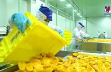 东南部加大农业高科技应用力度