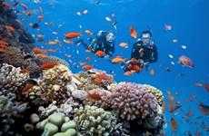 在越南富国岛香岛观赏珊瑚礁