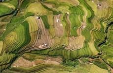 越南摄影在国际大赛上留下了烙印