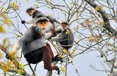 越南主动跨入恢复生态系统时期