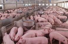 俄罗斯是越南最大猪肉供应国