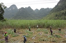 工贸部决定对来自泰国的蔗糖征收反倾销和反补贴税
