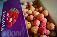 北江省制定新冠肺炎疫情之下的荔枝销售方案