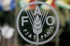 印尼当选2021-2024年阶段联合国粮农组织亚洲代表