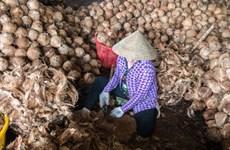 比利时一集团有意将椰维炭生产技术转让给越南