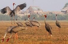 同塔省努力做好农业中生物多样性保护与发展工作