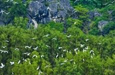 加强国际合作 促进生物多样性