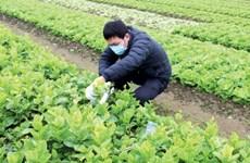 新冠肺炎疫情下推进农业增长