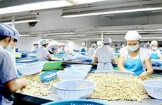 第三季度越南腰果出口有望实现可观增长