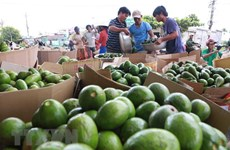 越南农产品克服疫情 走得更远