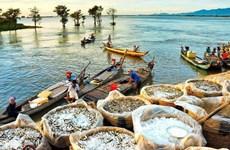 越南九龙江三角洲旅游业寻求方法渡过疫情难关