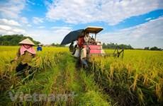越南农业迎来新风口