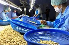 越南继续成为俄罗斯第一大腰果供应国