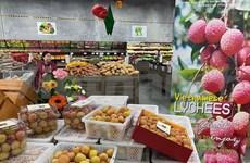 越南农产品纷纷抢占澳大利亚市场
