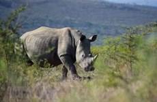 9·22世界犀牛日:增强民众对保护犀牛的意识
