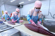 金枪鱼产品力争充分利用《越南-欧盟自由贸易协定》带来的优惠