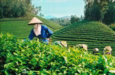 越南太原省出口金额超过210亿美元