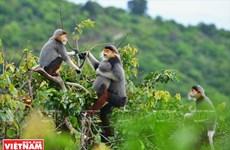 越南岘港山茶半岛大自然的恩赐(组图)