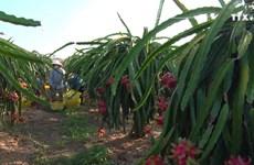 新型冠状病毒感染肺炎疫情:越南农产品销售方案