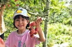 组图:城市小孩儿采摘荔枝  感受丰收的喜悦
