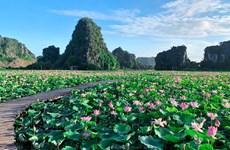 组图:宁平省在秋季盛开的荷花池令人惊叹