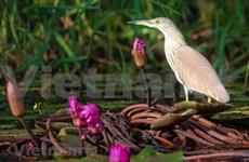 组图:鸟栖国家公园鸟类之美