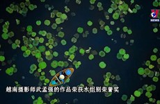 越南莲花池划船照片荣获2021年度大自然摄影大赛奖项