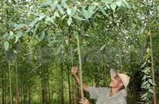 APFNet帮助越南落实可持续森林管理工作