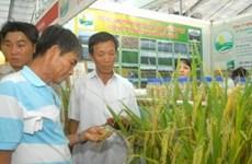 2010年国际农业展会在同奈省举行