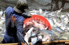 WWF 越南机构同意将越南查鱼撤出红色名录