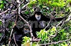 成立Hon Heo黑腿白臂叶猴保护区