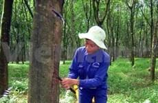 今年越南橡胶出口量增长89%