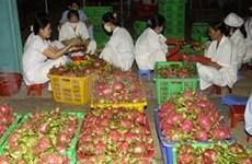2011年越南新鲜水果出口市场景气