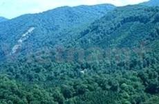 全国森林新种植面积为245万公顷