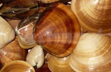 越南向美国出口双壳软体动物将会增多