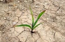 越南支持全球气候服务框架的建议