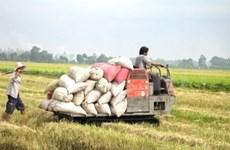 东盟大力推动实现粮食安全目标进程