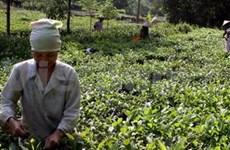 2011年越南太原第一届国际茶节:喜庆狂欢节