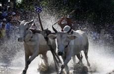 2011年第5次越南南部高棉族文化体育旅游节拉开帷幕