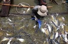 今年越南九龙江三角洲水产养殖业喜获丰收