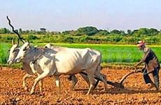国际农业发展基金会帮助柬埔寨发展农业