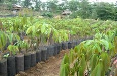 越南泰和集团加大对老挝的投资力度