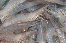越南在全球最大虾类养殖生产国家排行榜上位居第三
