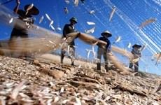 越南九龙江三角洲集中发展水产产业