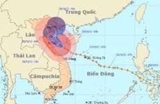 """""""8号台风""""登陆越南东北部和北中部"""