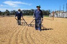 越南咖啡业发展前景