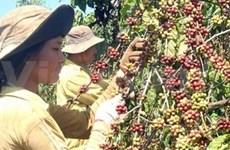 越南西北和西原地区投资促进会即将举行