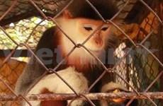 河南省村民将一只白臀叶猴移交给特用林管委会