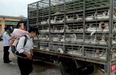 越南各地方积极展开预防甲型H7N9禽流感工作