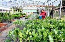 越南政府副总理黄忠海:越南尽力提高农产品销售量